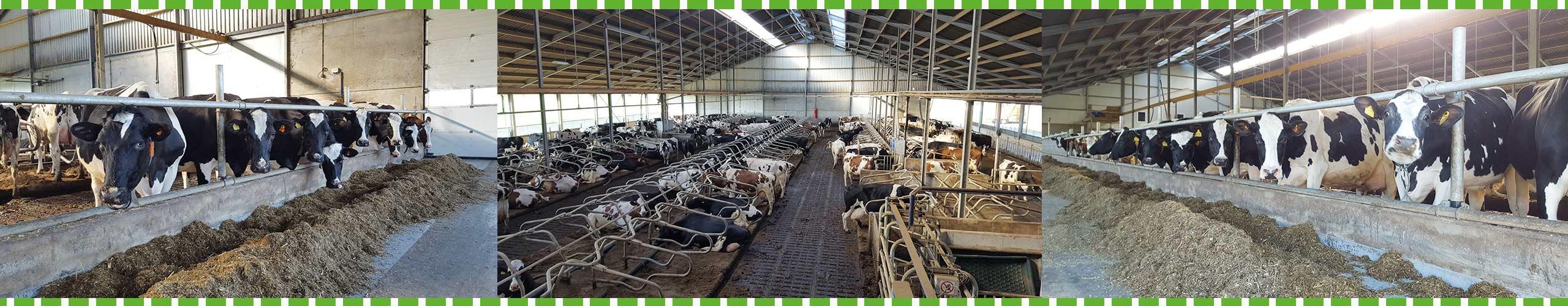 Slider 4 - Boerengolf Hedel - Activiteiten bij de boer
