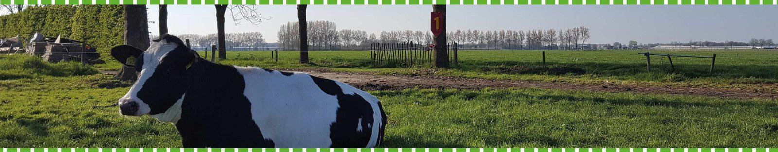 Slider 7 - Boerengolf Hedel - Activiteiten bij de boer