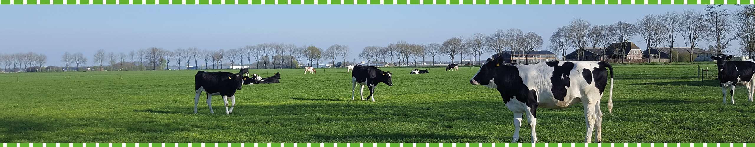 Slider 8 - Boerengolf Hedel - Activiteiten bij de boer